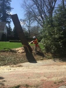 Boss Tree Services call for your Free Estimate @ 647-710-1914
