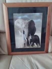 Picture of Elephant and Calf