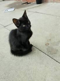 Cute 10 week old kitten
