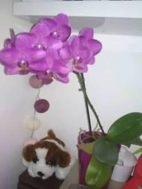 Orchids/ flowers