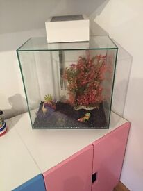 Modern fish tank ! Like new!!!! Bargin! One year old. With stuff