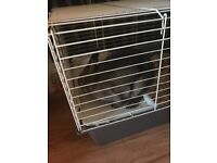 Female rabbit, indoor and outdoor hutch