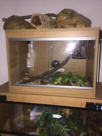 Reptile tank - full set up