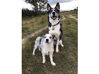 Tails and Trails DOG WALKING service in Crawley and Maidenbower