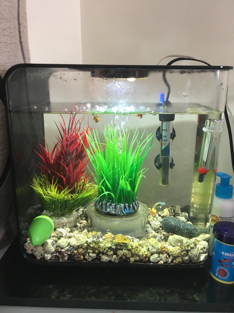 Biorb flow 15 litre Black fish tank with 3 fish | in Gosport, Hampshire | Gumtree