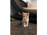Cute fluffy kitten ready to leave