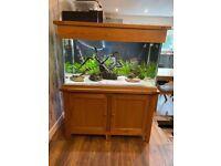 Aqua oak 340L fish tank Full set up.