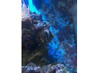Sea urchin Marine