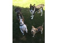 Walking Paws Ipswich - Dog Walking, Boarding and Pet Sitting - Ipswich and surrounding areas