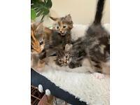 4 beautiful kittens 2 boys 2 girls