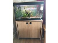 125L Fluval Roma aquarium with Cabinet and equipment for tropical set up