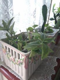 Plants, inc Aloe Vera, Cactus & many more