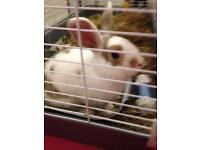 Rabbit and cage £50 OVNO