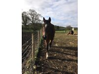 26yr old mare looking for companion only home