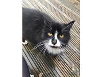 Black and white cat free to good home