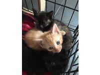 Beautiful litter of kittens