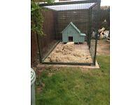 Hen house, automatic door-opener & automatic feeder