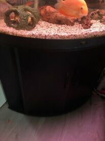 Juwel corner tank and extras