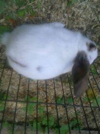 rabbits x3 boys