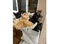 Kitten mix breed.