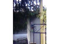 Metal iron gate needs painting