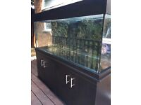 5x2x2 new condition clear seal fish tank aquarium with marine tropical setup (delivery/installation)