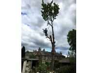Tree surgeon Edinburgh and Midlothian fully qualified