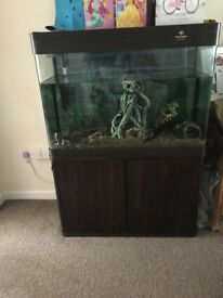 Cleair aquatics fish tank
