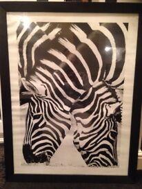Zebra picuture