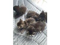 5 new born kittens