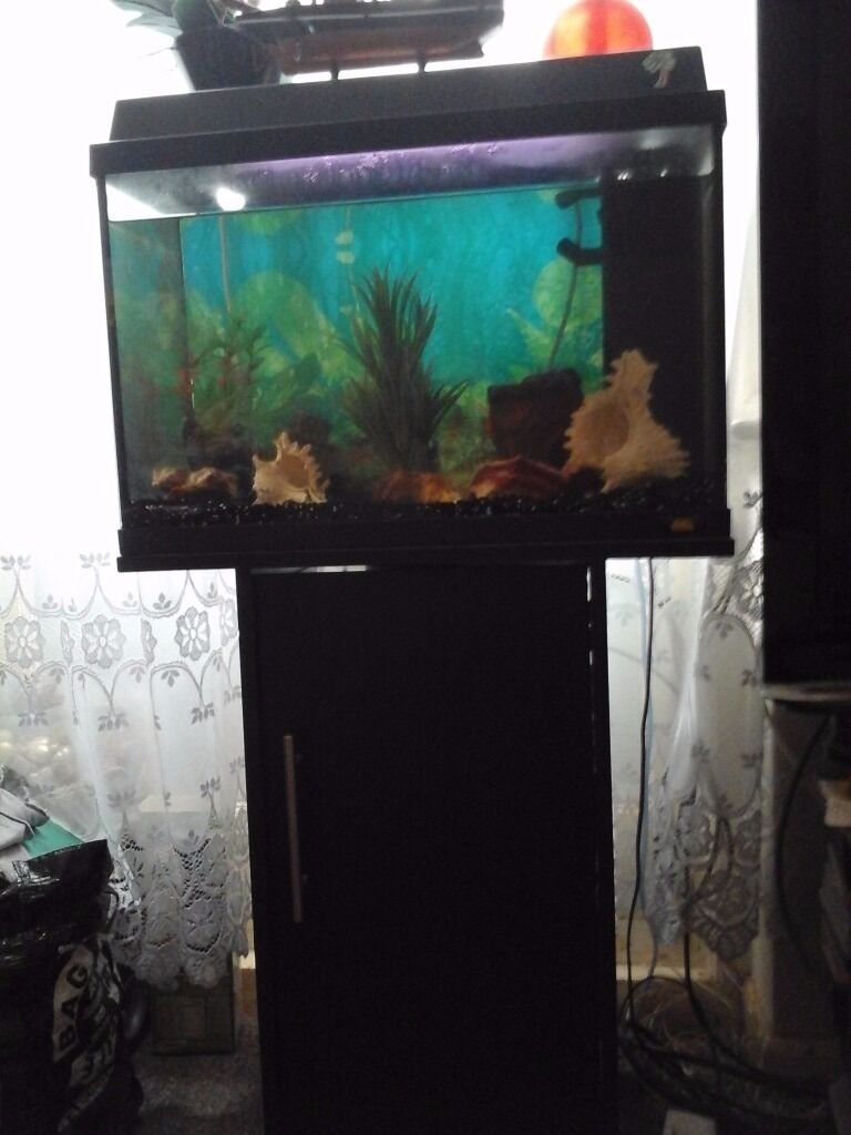 Buy fish for aquarium london - Fish Tank With Stand