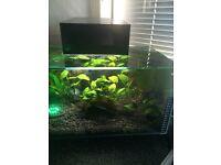 Fluval edge 25 L aquarium