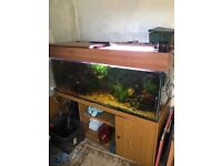 5ft fish tank ready to go !