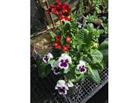 Medium barrel style planter with flowers