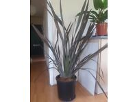 Huge plant for sale