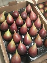 Sam's Quality FIGS Leppington Camden Area Preview