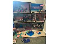 Lol dolls house + Big Sister + lots of dolls and pet
