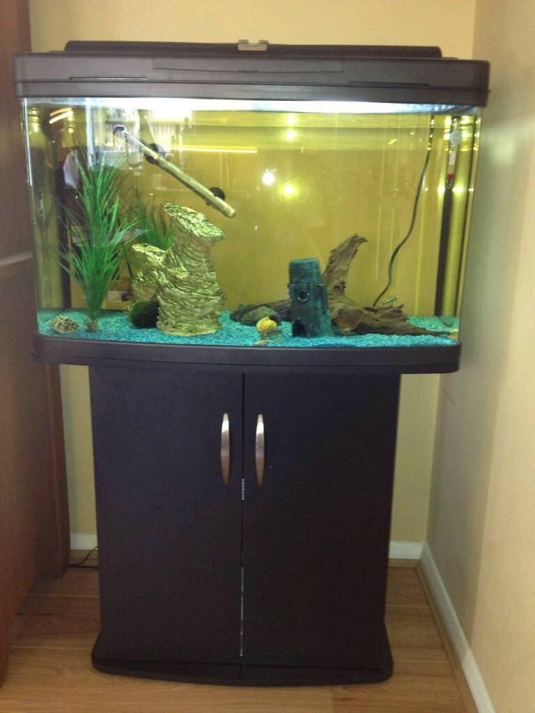 2 ft fishbox fishtank with stand in superb condition
