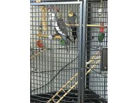 large corner parrot/cockatiel cage