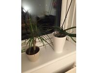 Orchid, aloe vera, dracaena, and 2 cactus