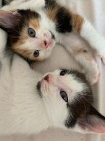Beautiful kittens ready now 😍🐱
