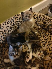 Beautiful friendly kittens