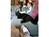 Beautiful Black Cat Called Duke