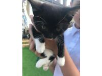 Kittens looking for new homes