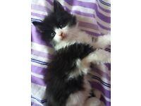 Four male kittens