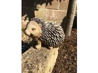 Garden ornament- Hedgehog