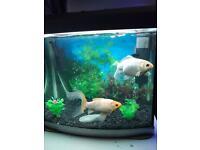 Fish tank with 2 goldfish