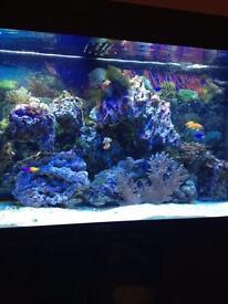 Marine aquarium salt water fish tank