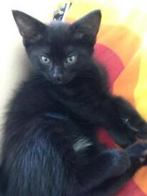 Kitten 9 weeks old!