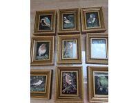 Vintage bird pictures